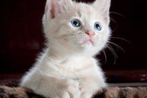 赤ちゃん 猫 アレルギー